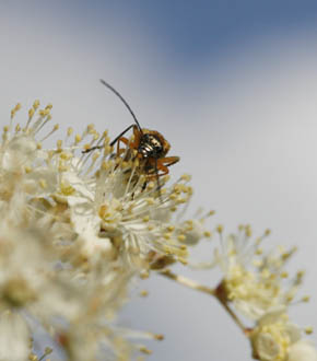 canon_60_mm_2.8_insect