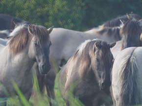 Horsesmini