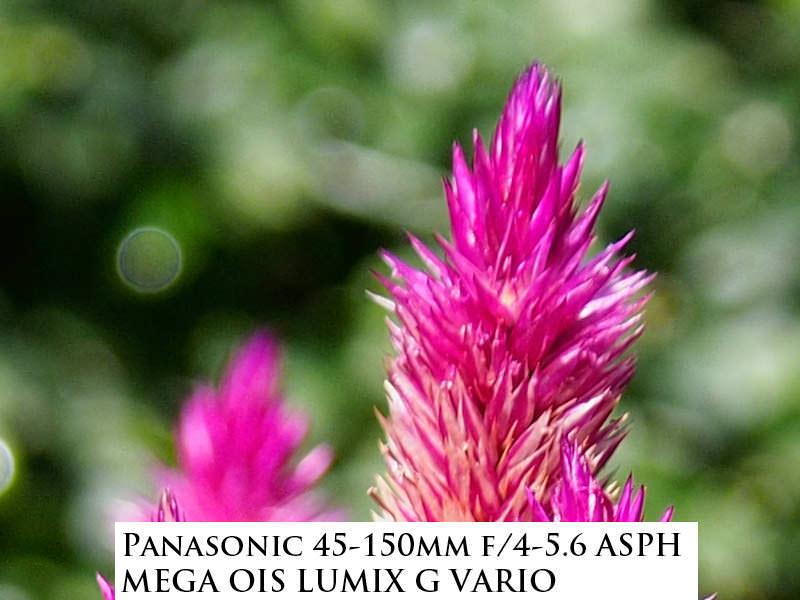 Panasonic-45-150--mm-PZ-bokeh
