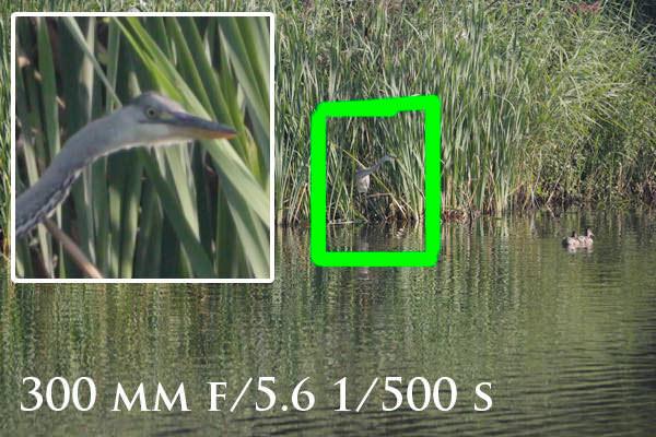 300mm-sample-image