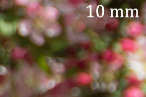bokeh10mm-sample-image