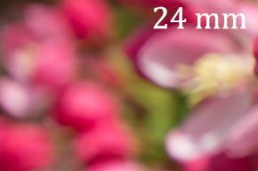 bokeh24mm-sample-image