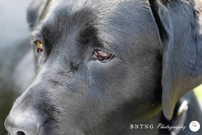 Dogseye