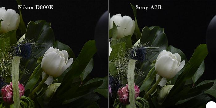 sonyvsnikon700px