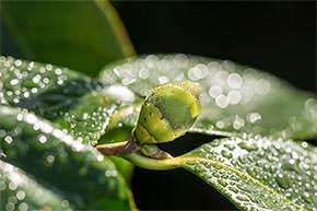 groenblaadje