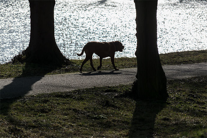 Praktijkopnamehond55200