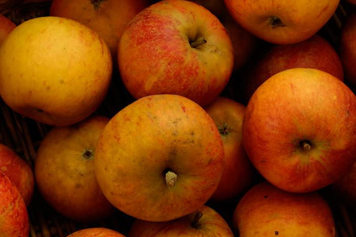 appelsvoor web groot