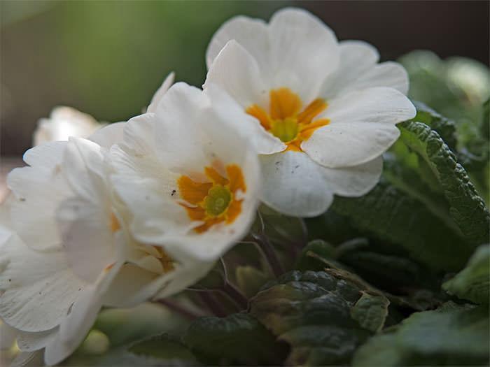 700flower