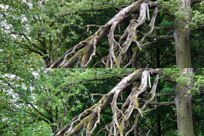 J5bovenJ3ben boom groot