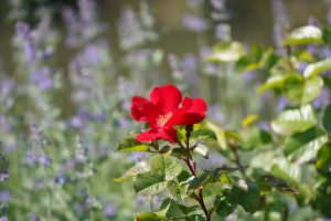foto van bloem met de Tamron 70-180mm